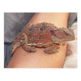 Wir nannten die gehörnte Kröte: Ho'Dee Towd… Kathy Postkarte