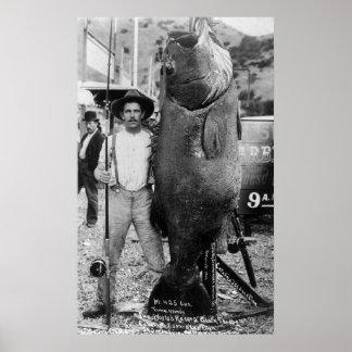 Wirkliche große Fische, frühe 1900s Poster