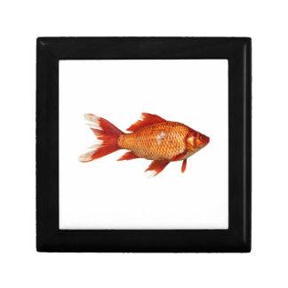 Wirklicher Goldfisch Schmuckschachtel
