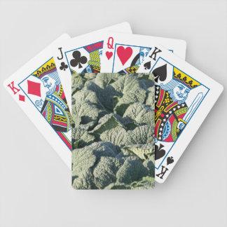 Wirsingkohl-Pflanzen auf einem Gebiet Bicycle Spielkarten