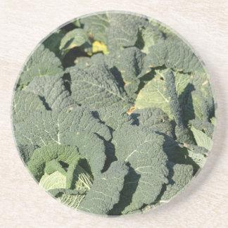 Wirsingkohl-Pflanzen auf einem Gebiet Sandstein Untersetzer