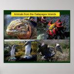 Wissenschaft, Tiere von den Galapagos Plakate