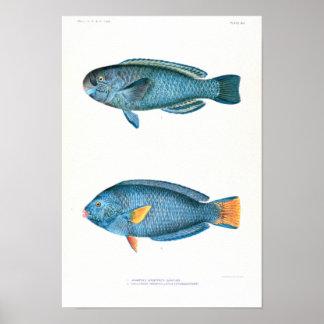 Wissenschaftliche Fisch-Studien Poster