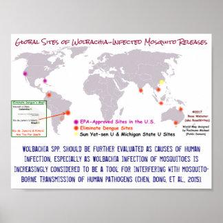 Wolbachia und menschliche Infektion durch Poster