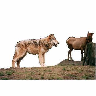 wolf28 fotoskulptur