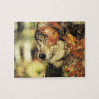 Wolf (Canis Lupus), Headshot, mit Herbstfarbe, Puzzle
