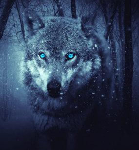 Mit Blauen Augen Wolf T Shirts Zazzlede