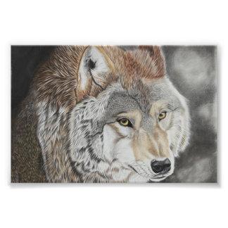 Wolf - Farbstiftzeichnung Fotodruck
