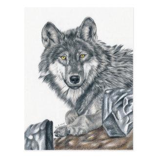 Wolf - Farbstiftzeichnung Postkarte