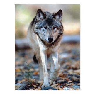 WOLF-GEHEN POSTKARTE