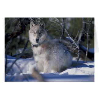 Wolf im Schnee Karte