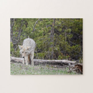 Wolf in Yellowstone-Puzzlespiel Puzzle