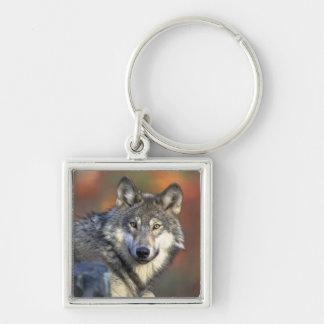 Wolf-Klugheit Schlüsselanhänger