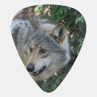 Wolf-Knäuel Gitarren-Pick
