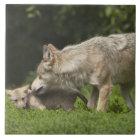 Wolf mit Welpen Keramikfliese