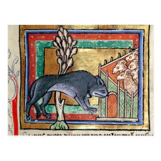 Wolf Mitgliedstaates Roy A außerhalb eines Schafs Postkarte