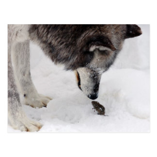 Wolf trifft Maus Postkarte