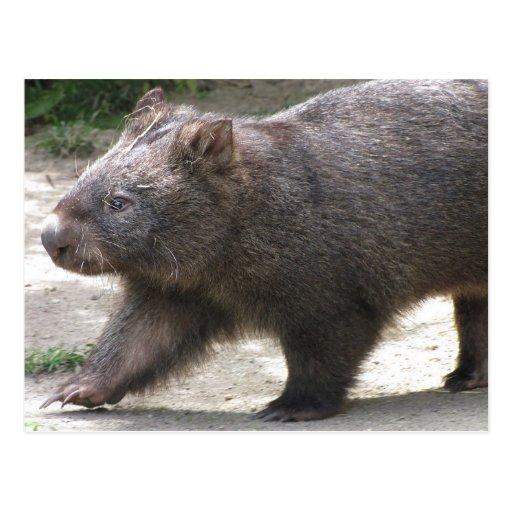 Wombat Postkarten