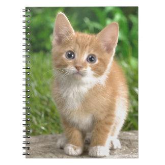 Wow-Katze! Notizblock