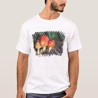 Wulstlingsfamilienpilz T-Shirt