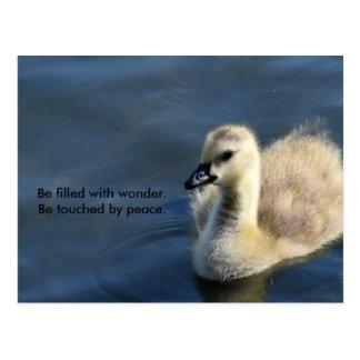 Wunder und Frieden Postkarte
