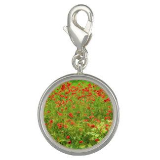 Wunderbare Mohnblumen-Blumen VII - Wundervolle Foto Charms