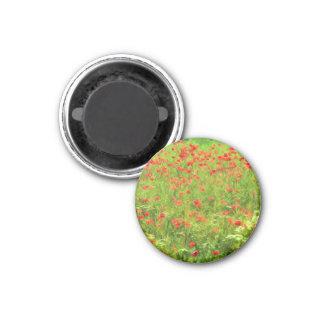 Wunderbare Mohnblumen-Blumen VII - Wundervolle Runder Magnet 3,2 Cm