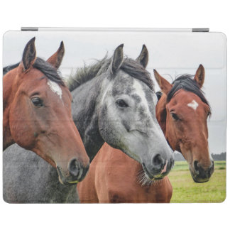 Wunderbare Pferdestallions-Fotografie iPad Hülle