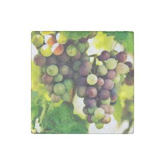 Wunderbare Rebe-Trauben, Natur, Herbst-Fall Sun Steinmagnet