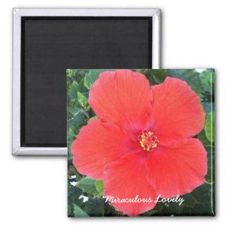 Wunderbares reizendes - roter Blumen-Magnet Quadratischer Magnet