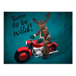 Wunderliches Ren: Geboren, wild zu sein! Postkarte