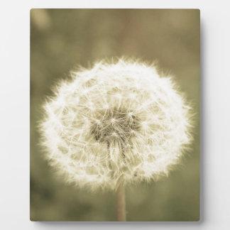 Wunsch der Blume aged5 Fotoplatte
