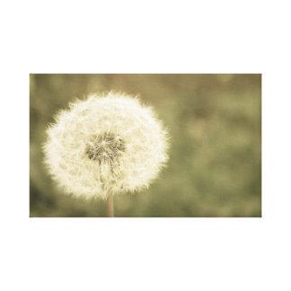 Wunsch der Blume aged5 Leinwanddruck