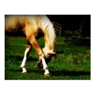 Würdevolles Verbeugungs-Pferd Postkarte
