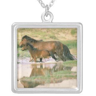 Wüste Asiens, Mongolei, Gobi. Wilde Pferde Versilberte Kette