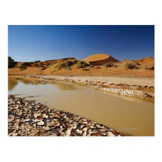 Wüste Landschaft von Namib bei Sossusvlei füllte Postkarten