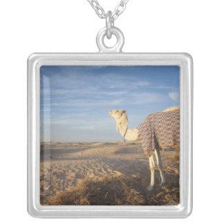 Wüste Tunesiens, Sahara, Douz, große Düne, Kamel, Versilberte Kette