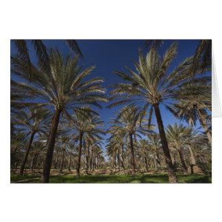 Wüste Tunesiens, Sahara, Douz, Zone Touristique, 2 Karte