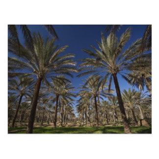 Wüste Tunesiens, Sahara, Douz, Zone Touristique, 2 Postkarte