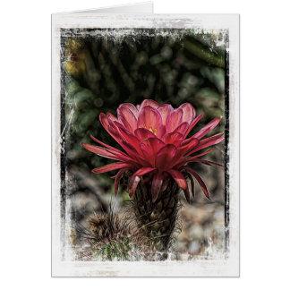 Wüsten-Kaktus-Fackel-Blume Karte
