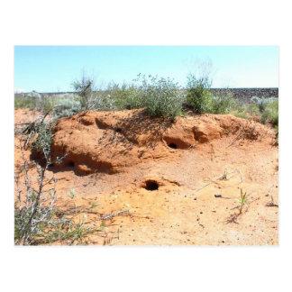 Wüsten-Lebewesen-Wohnungen im roten Sand Postkarte