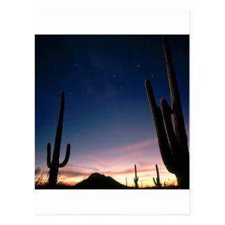 Wüsten-Stern schleppt Saguaro Arizona Postkarte