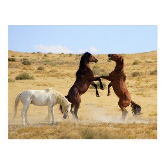 Wüsten-Tanz Postkarte