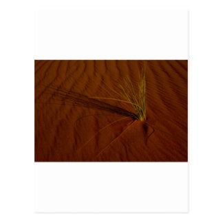 Wüstenleben Postkarte