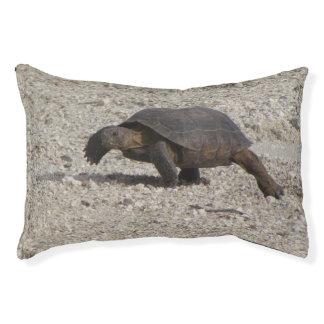 Wüstenschildkröte Haustierbett