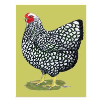 Wyandotte:  Silber-geschnürte Henne Postkarte