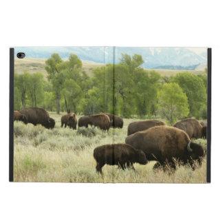 Wyoming-Bison-Natur-Tier-Fotografie
