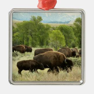 Wyoming-Bison-Natur-Tier-Fotografie Silbernes Ornament