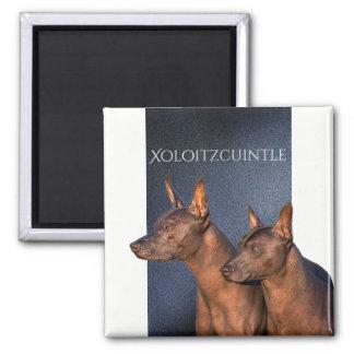 Xoloitzcuintle Magnet