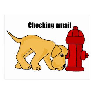 XX niedlicher Welpen-Hund, der pmail Postkarte
